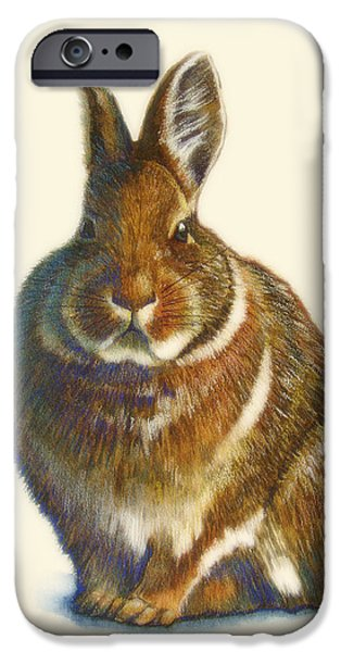 Rabbit iPhone Cases - Rabbit iPhone Case by Catherine Noel
