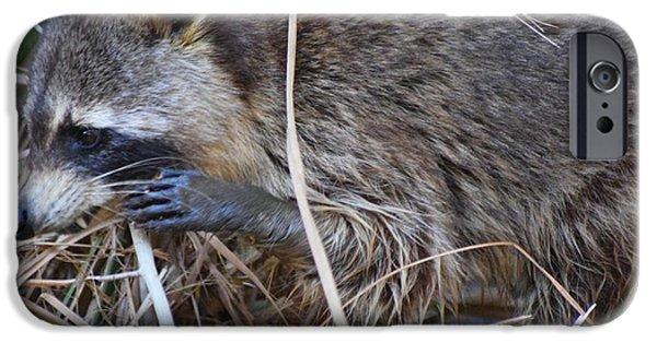 Raccoon Digital Art iPhone Cases - Raccoon Feeding iPhone Case by Sheri McLeroy