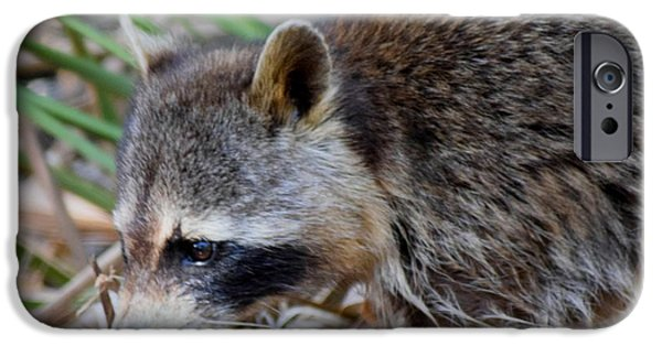 Raccoon Digital Art iPhone Cases - Raccoon Hunting for Food 1 iPhone Case by Sheri McLeroy