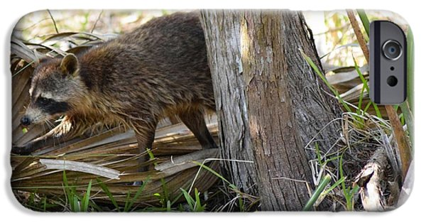 Raccoon Digital Art iPhone Cases - Raccoon Hunting for Food 2 iPhone Case by Sheri McLeroy