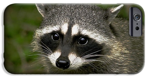 Recently Sold -  - Haybale iPhone Cases - Raccoon iPhone Case by Robert Bales