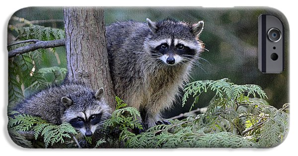 Young Digital Art iPhone Cases - Raccoons in Stanley Park iPhone Case by Maria Angelica Maira