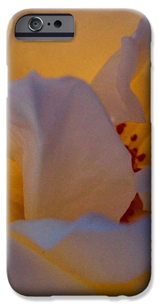 Radiance iPhone Case by Cathleen Cario-Reece