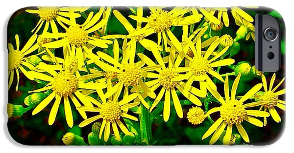 Natchez Trace Parkway iPhone Cases - Ragwort in Donivan Slough at Mile 283 of Natchez Trace Parkway-Mississippi  iPhone Case by Ruth Hager