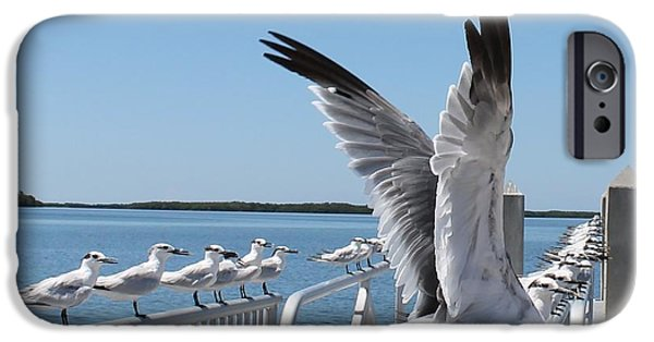 Flying Seagull iPhone Cases - Railing of Seagulls iPhone Case by Patricia Twardzik
