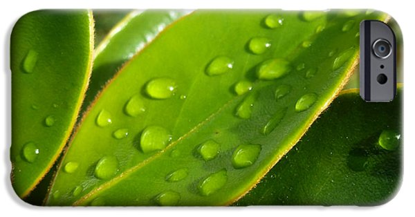 Raining Pyrography iPhone Cases - Rain Droplets on Leaves iPhone Case by Fabien White
