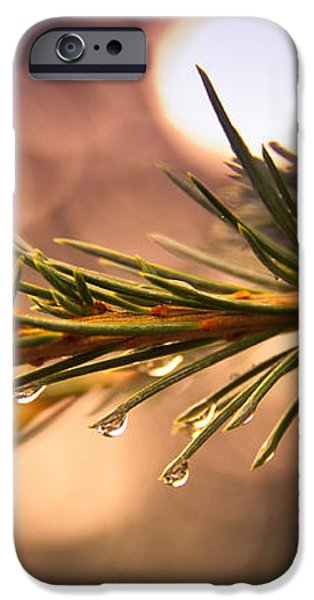 Rain Droplets on Pine Needles iPhone Case by Loriental Photography