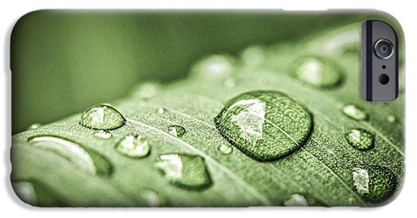 Plants iPhone Cases - Rain drops on green leaf iPhone Case by Elena Elisseeva