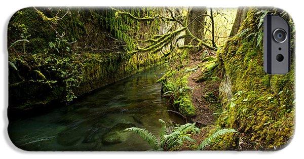 Randy Moss Photographs iPhone Cases - Rain Forest 2 iPhone Case by Randy Giesbrecht