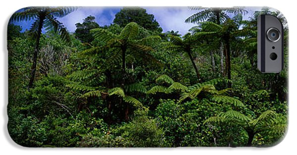 Raining iPhone Cases - Rain Forest Paparoa National Park S iPhone Case by Panoramic Images