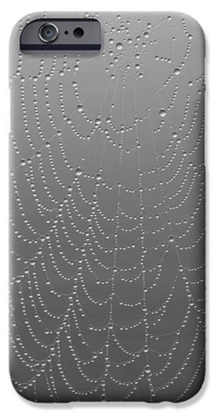 Rainy Day iPhone Cases - Rain on a Spider Web iPhone Case by Heidi Hermes