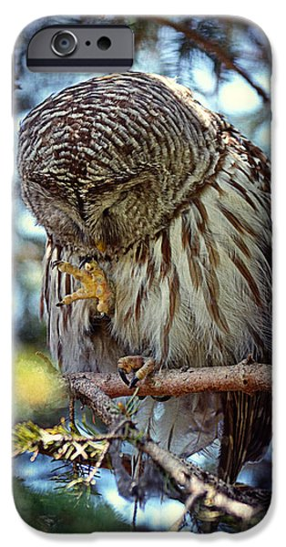 Rain Barrel iPhone Cases - Rain Owl iPhone Case by Maria Angelica Maira