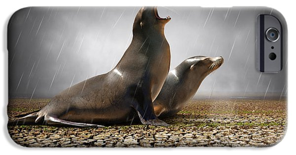 Sea Lions iPhone Cases - Rain Relief iPhone Case by Carlos Caetano