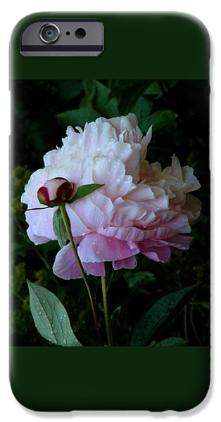 Ivory iPhone Cases - Rain-soaked Peonies iPhone Case by Rona Black