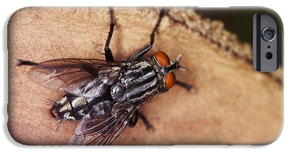 Explore Pyrography iPhone Cases - Rainbow Fly  iPhone Case by Sammuel Hernandez