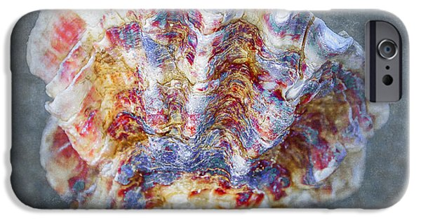 Spectrum Mixed Media iPhone Cases - Rainbow Shell iPhone Case by Svetlana Sewell