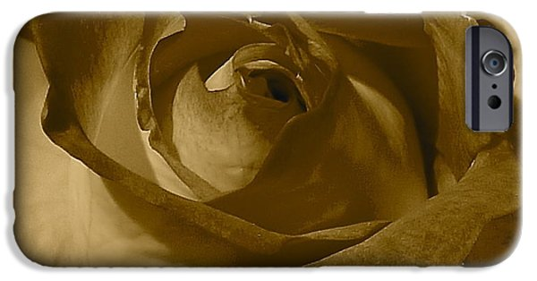 Rose Petal Sorbet iPhone Cases - Rainbow Sorbet Rose In Sepia iPhone Case by Denise Mazzocco
