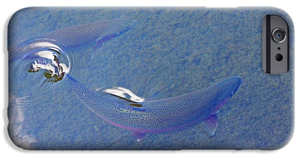 Wild Trout iPhone Cases - Rainbow Trout Art Prints Breaking Water Surface iPhone Case by Baslee Troutman