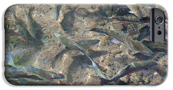 Wild Trout iPhone Cases - Rainbow Trout Art Prints Canvas Framed iPhone Case by Baslee Troutman