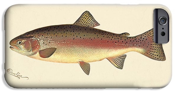 Antiques iPhone Cases - Rainbow Trout iPhone Case by Gary Grayson
