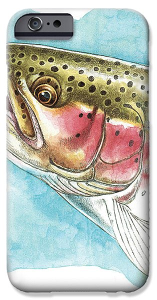 Rainbow Trout Study iPhone Case by JQ Licensing
