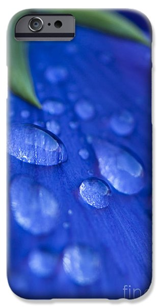 Raindrop Pansy iPhone Case by Anne Gilbert