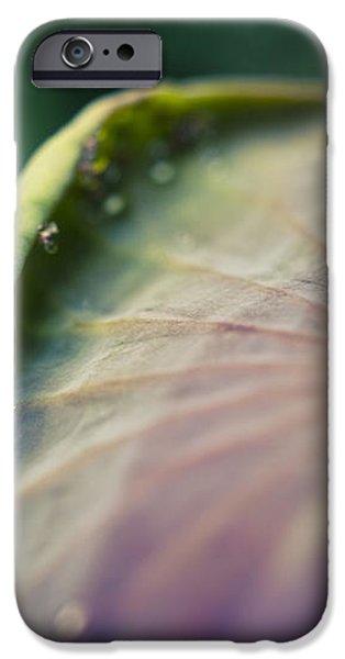Raindrops On A Lotus Leaf iPhone Case by Priya Ghose