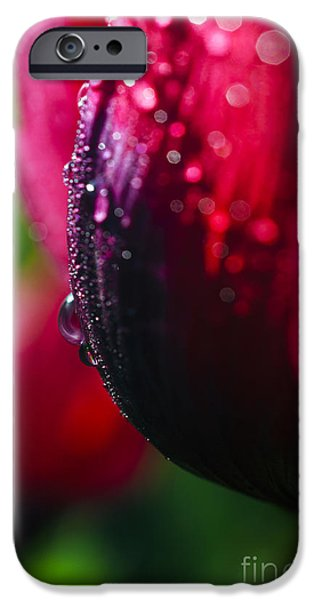 Wet Petals iPhone Cases - Raindrops on Blossom iPhone Case by Thomas R Fletcher