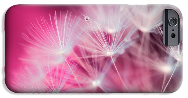 Raindrops iPhone Cases - Raindrops On Dandelion Magenta iPhone Case by Marianna Mills