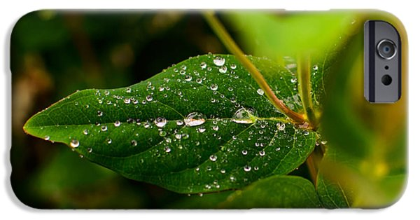 Pleasure iPhone Cases - Raindrops On Green Leaves I iPhone Case by Marco Oliveira