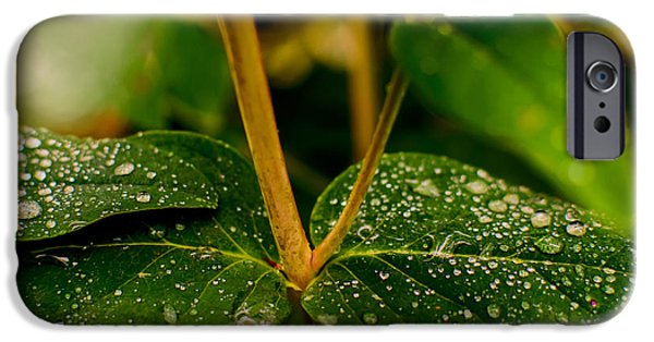 Pleasure iPhone Cases - Raindrops On Green Leaves II iPhone Case by Marco Oliveira