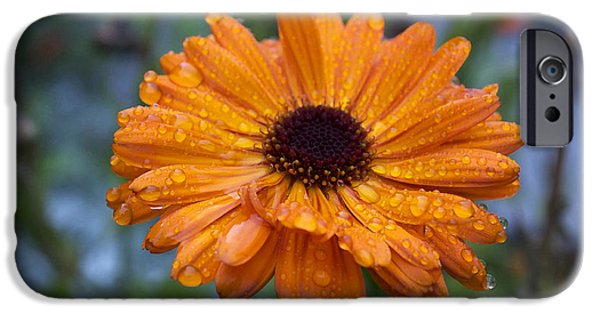 Rainy Day iPhone Cases - Raindrops on Orange Petals iPhone Case by Cathy Mahnke