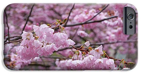 Tree Art Print iPhone Cases - Raindrops Springtime Pink Tree Blossoms Art iPhone Case by Baslee Troutman
