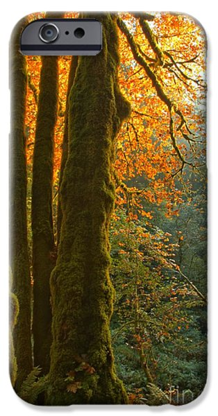 State Parks In Oregon iPhone Cases - Rainforest Orange iPhone Case by Adam Jewell