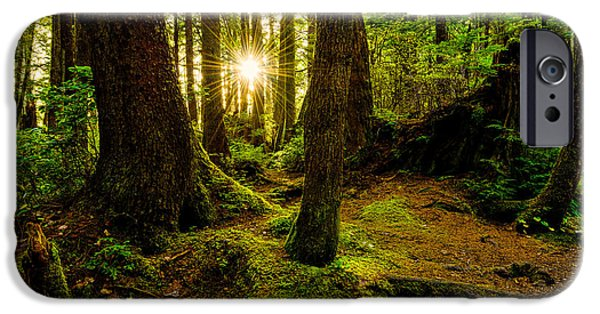 Hiking iPhone Cases - Rainforest Path iPhone Case by Chad Dutson