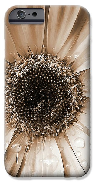 Rainsdrops on Gerber Daisy Sepia iPhone Case by Jennie Marie Schell