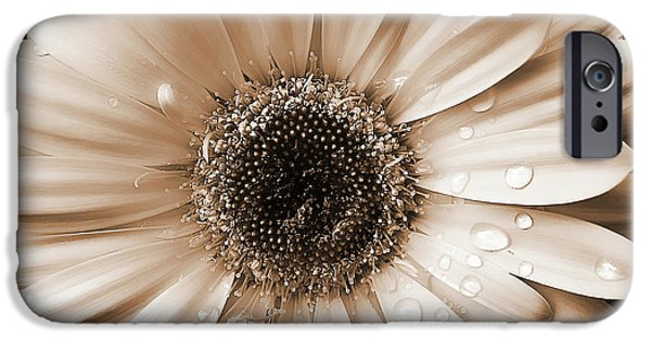 Up iPhone Cases - Rainsdrops on Gerber Daisy Sepia iPhone Case by Jennie Marie Schell