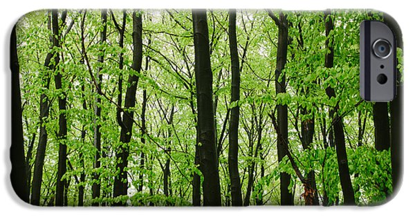 Rainy Day iPhone Cases - Rainy Day In The Forest iPhone Case by Pati Photography