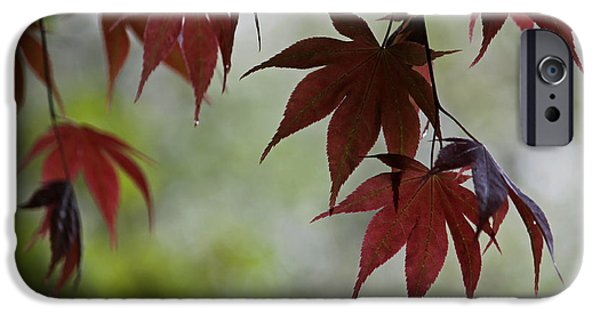 Rainy Day iPhone Cases - Rainy Day Series - Japanese Red Maple II iPhone Case by Suzanne Gaff