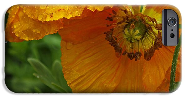 Rainy Day iPhone Cases - Rainy Day Series - Orange Poppies iPhone Case by Suzanne Gaff