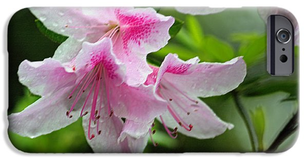 Rainy Day iPhone Cases - Rainy Day Series - Pink on Pink Azaaleas II iPhone Case by Suzanne Gaff