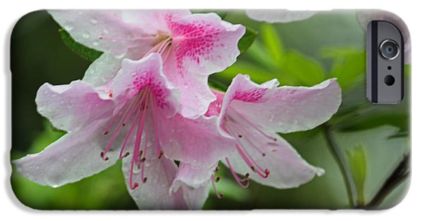 Rainy Day iPhone Cases - Rainy Day Series - Pink on Pink Azaleas iPhone Case by Suzanne Gaff