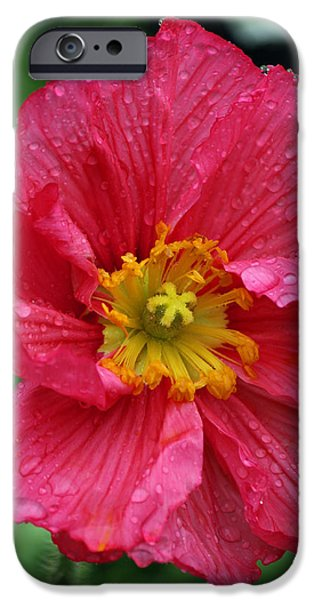 Rainy Day iPhone Cases - Rainy Day Series - Red Poppy iPhone Case by Suzanne Gaff