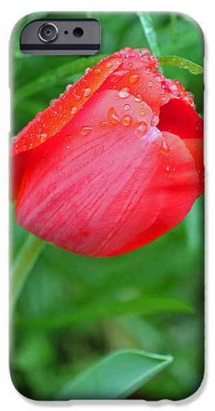 Rainy Day iPhone Cases - Rainy Day Series - Red Tulip iPhone Case by Suzanne Gaff