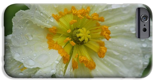 Rainy Day iPhone Cases - Rainy Day Series - White Poppy iPhone Case by Suzanne Gaff