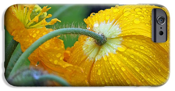 Rainy Day iPhone Cases - Rainy Day Series - Yellow Poppies iPhone Case by Suzanne Gaff