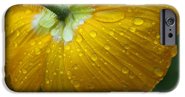 Rainy Day iPhone Cases - Rainy Day Series - Yellow Poppy iPhone Case by Suzanne Gaff