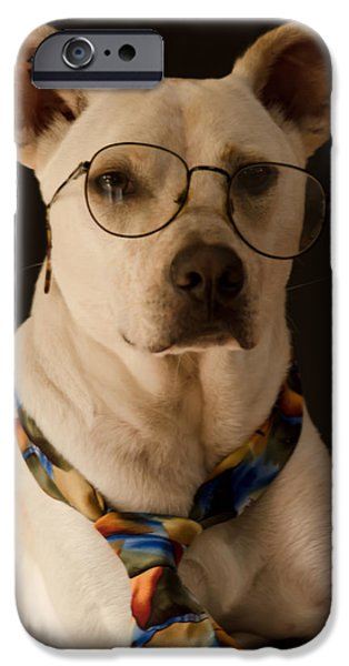 Mixed Labrador Retriever iPhone Cases - Rainy Days and Mondays Always Get Me Down iPhone Case by Don Schwartz