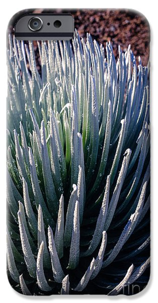 Plants iPhone Cases - Rare Silversword Plant in Haleakala National Park Maui Hawaii iPhone Case by Edward Fielding