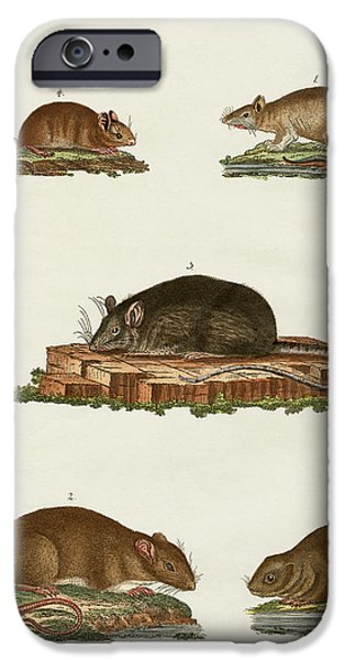 Norway Drawings iPhone Cases - Rats and mice iPhone Case by Splendid Art Prints
